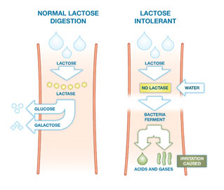 how to get calcium when lactose intolerant