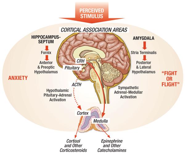 Stress como causa principal de doenças  cardiovascular 6